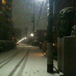 東京、積雪。