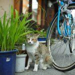 Photo:猫と自転車 2