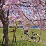 Photo:花と自転車