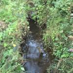 再び鶴見川の源流を訪ねる(2)源流の雰囲気を手軽に味わうなら小山田緑地がおすすめ