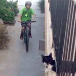 コネタ:猫と自転車、三猫三様。
