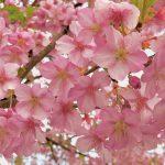「いつものコース」から感じ取る春の訪れ