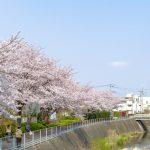 鶴見川沿いの桜を愛でるポタリング
