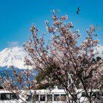 海の向こうに浮かぶ富士山 — 沼津・三津浦エリアを自転車で巡る