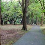 BRI-CHAN:家族で楽しめる公園のサイクリングコースを活用しよう